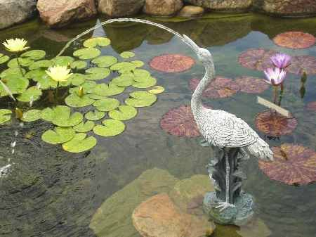 17 Best Images About Pond Spitters On Pinterest Gardens
