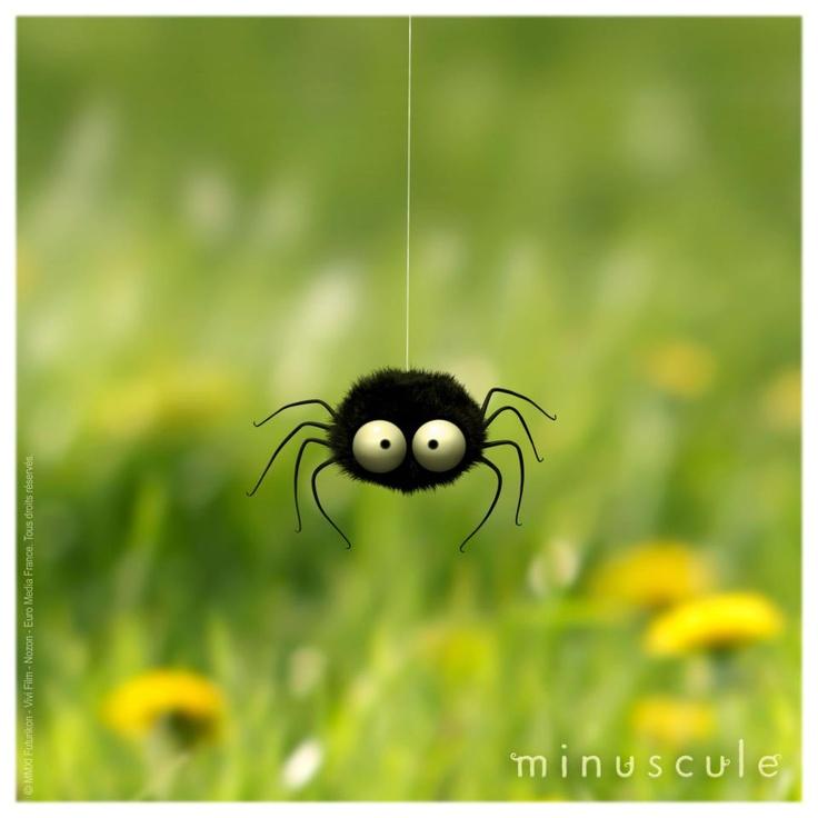 Ma préférée ! La petite araignée noire ébouriffée !!!