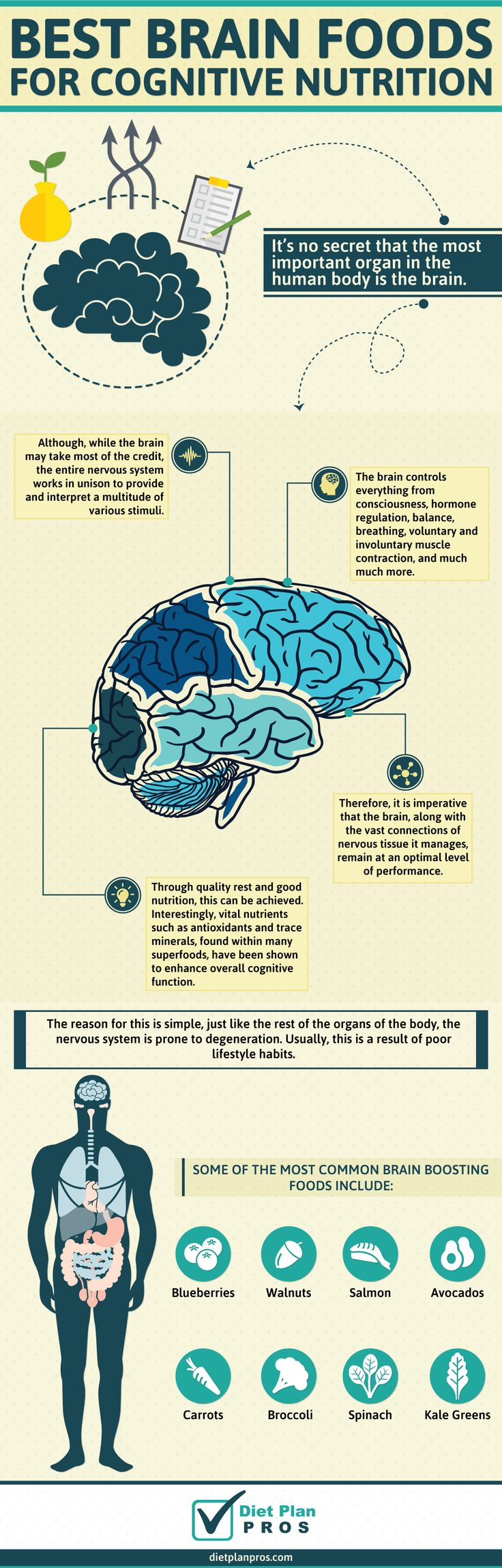 Best Brain Foods for Cognitive Nutrition: It's no secret that the most important organ in the human body is the brain. Although, while the brain may take most of the credit, the entire nervous system works in unison to provide and interpret a multitude of various stimuli. The brain controls everything from consciousness, hormone regulation, balance, breathing, voluntary and involuntary muscle contraction, and much much more.