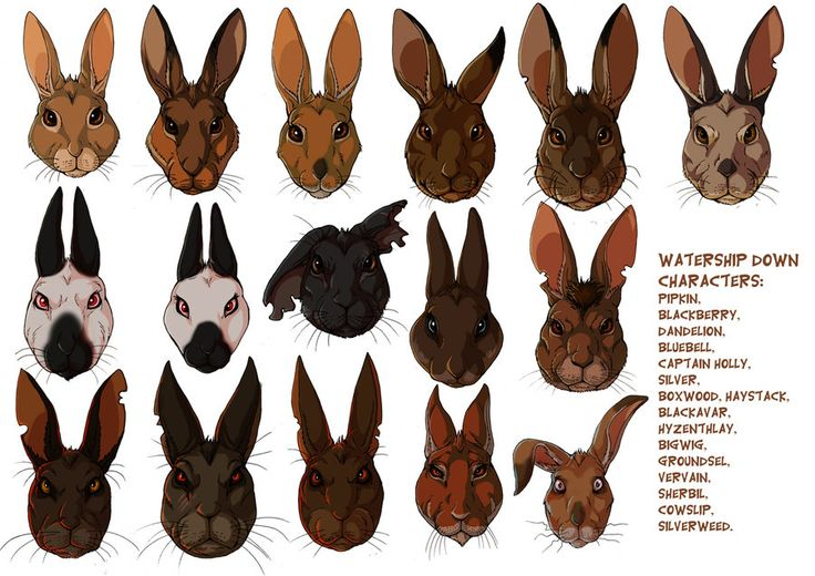 watership down and rabbits - characters