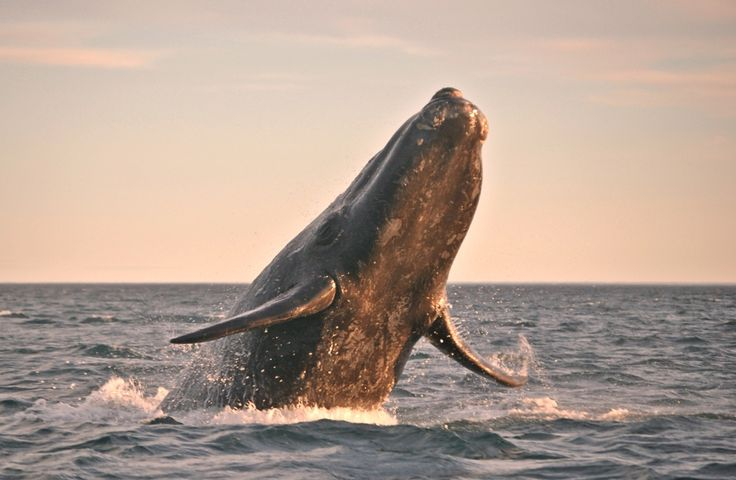 Our expert advice on securing this season's best whale photos