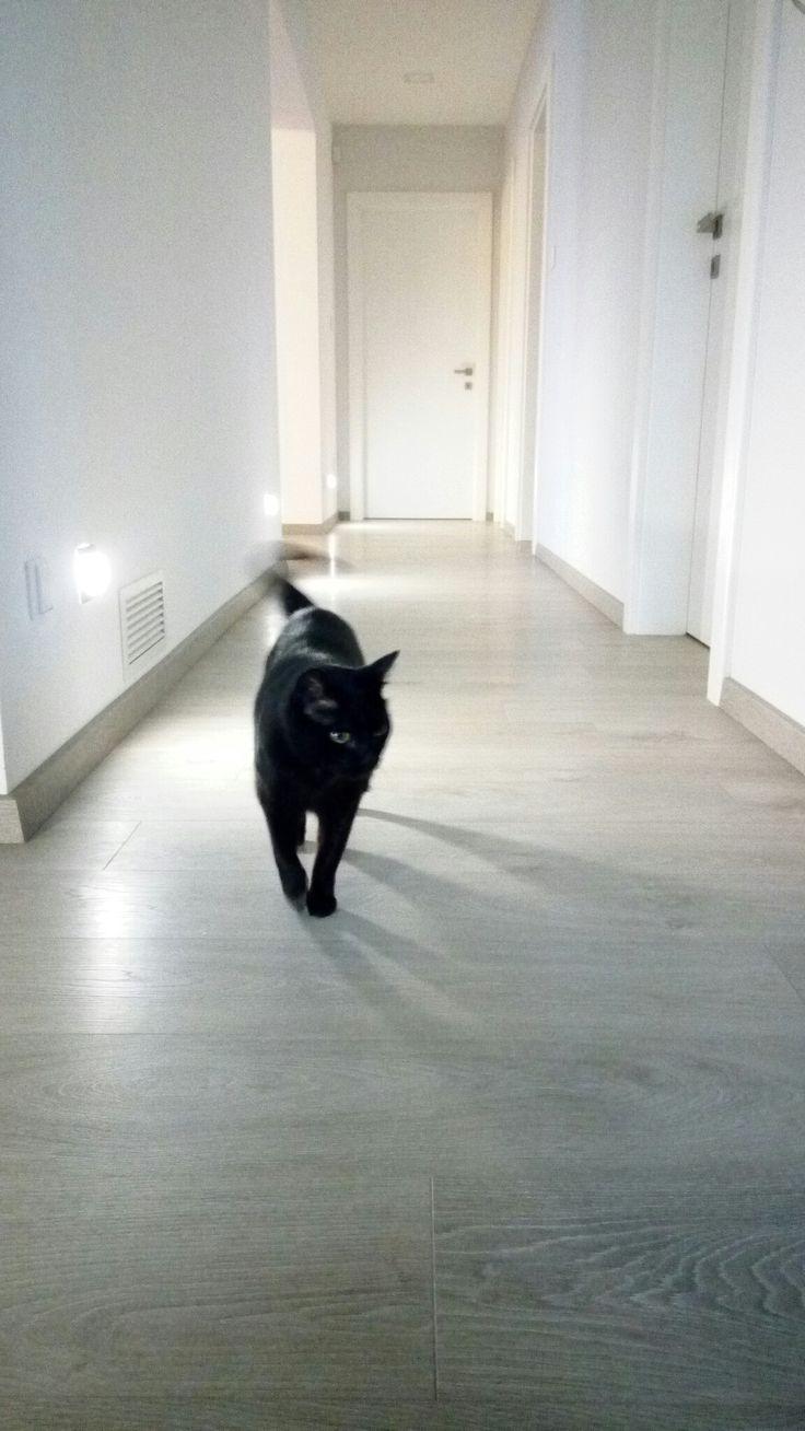 Corridor, black cat