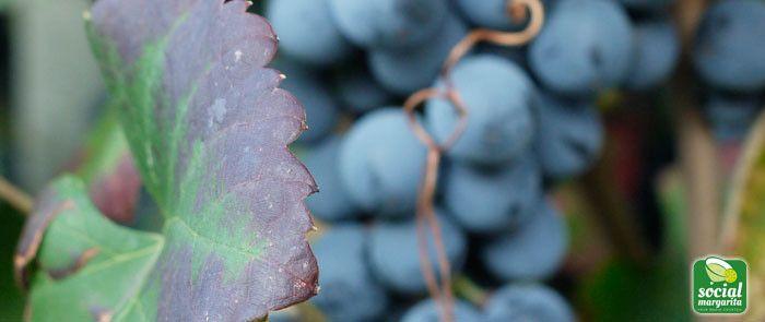 Digital Marketing del Vino e Social Media Marketing del Vino by Social Margarita