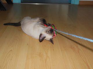 deborah haakt kattenspeeltje crochet kat toy