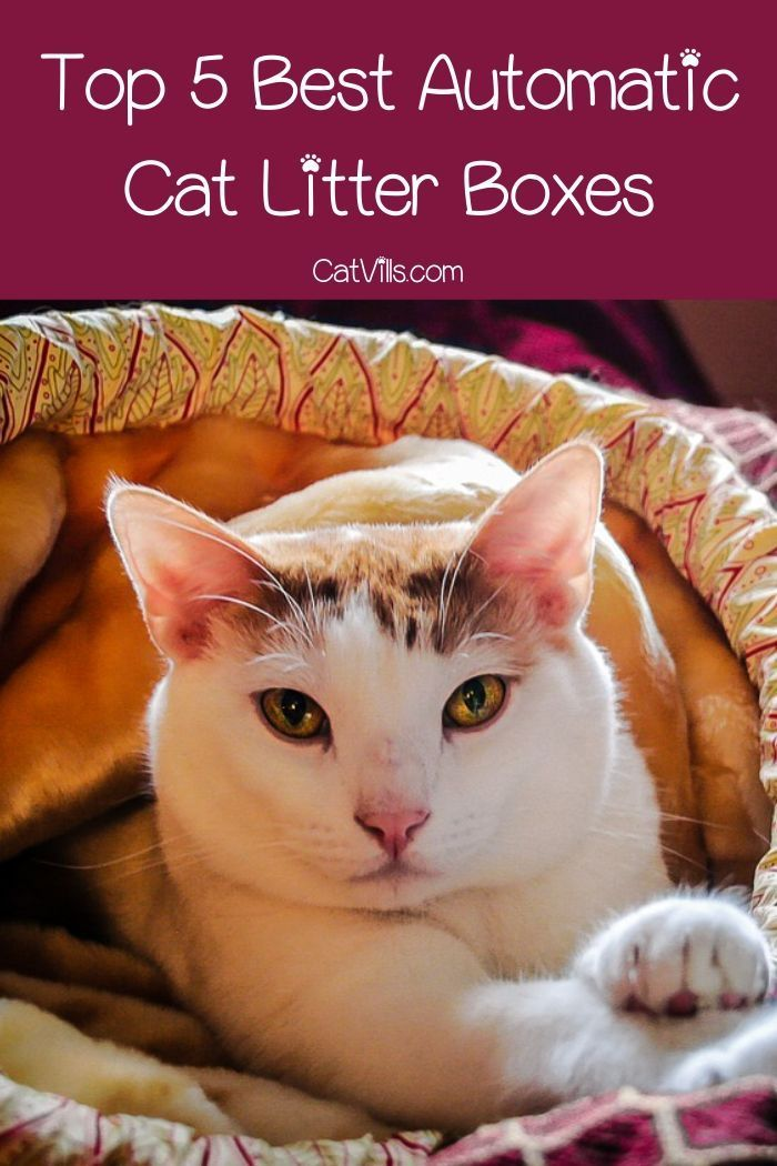 Top 5 Best Automatic Cat Litter Boxes With In Depth Reviews With Images Automatic Cat Litter Cat Litter Box Automatic Cat