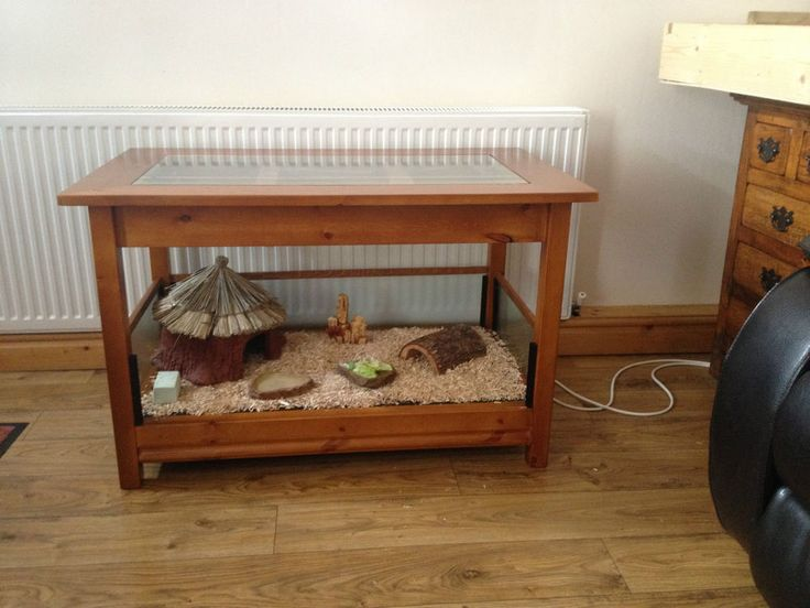 Best 25 Tortoise Table Ideas On Pinterest Tortoise