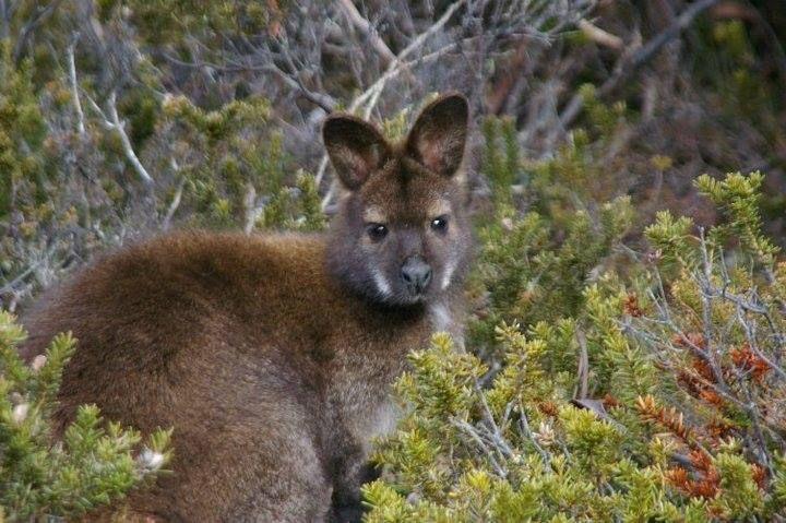 This was also taken at Lake Dobson Tasmania, the wildlife was not shy.