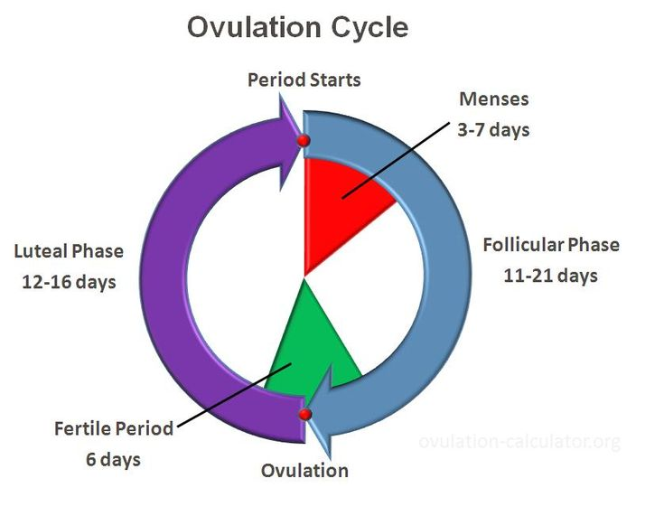 ovulation symptoms - read more