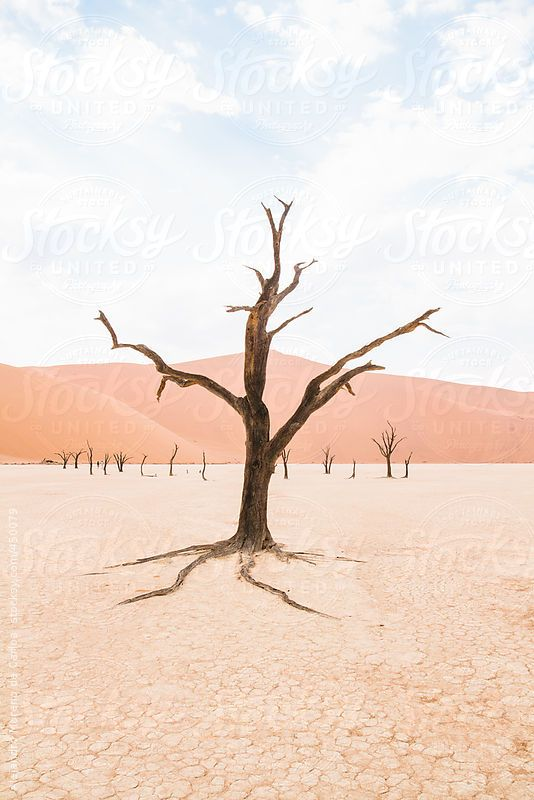 Dry lonely tree on the desert on iconic Deadvlei, Sossusvlei, Namibia. by Alejandro Moreno de Carlos