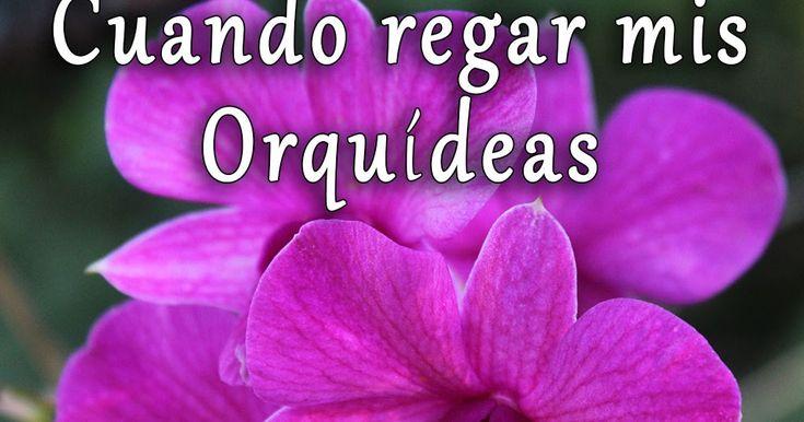 Patrones de riegos más recomendados para diferentes tipos de orquídeas. Información útil para principiantes en el cultivo de estas plantas.
