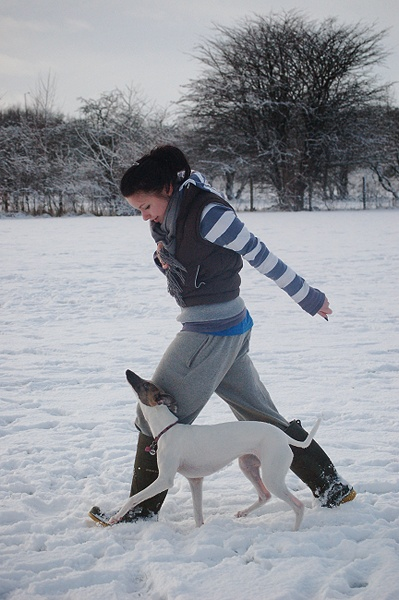 Whippet snow