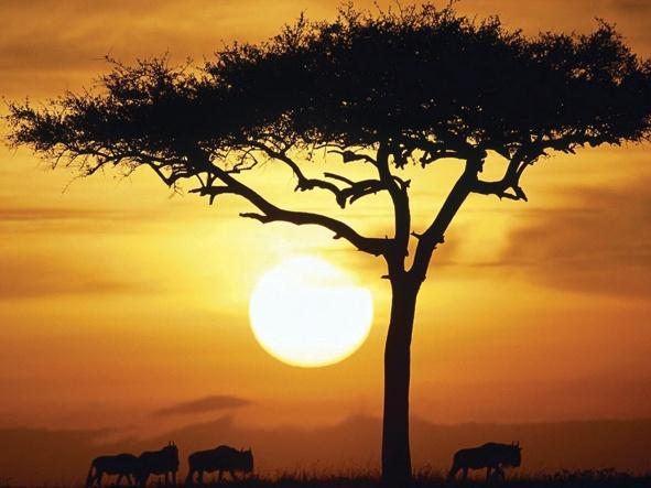 Blue Wildebeest at Sunrise, Masai Mara, Kenya featured in Wedding Inspirations Autumn 2011 (June) www.weddinginspirations.co.za