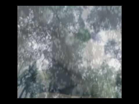 νικολέττα Αναστασίου-ο σπόρος που ήθελε να γίνει δάσος