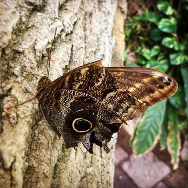 Casa de las Mariposas de Viena  un ambiente tropical artificial en pro de la preservación