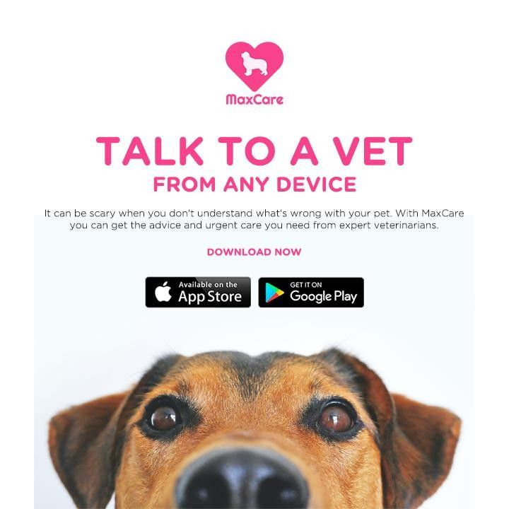 Don T Rely On Google To Diagnose Your Pets Issues Our Best Friends Deserve The Best That S Why We Are Here 24 7 With Fully In 2020 Your Pet Urgent Care How To Get