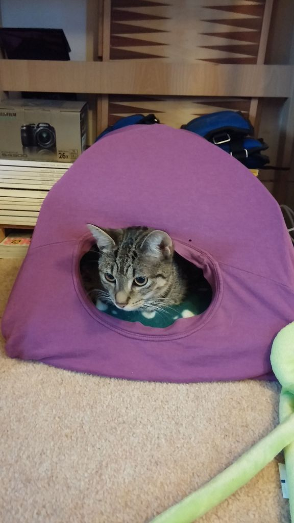 17 best images about kitty things i love on pinterest for Cat tent