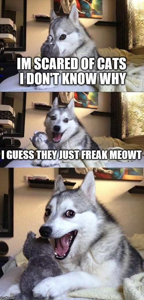 Bad Pun Dog   IM SCARED OF CATS I DON'T KNOW WHY I GUESS THEY JUST FREAK MEOWT   image tagged in memes,bad pun dog   made w/ Imgflip meme maker