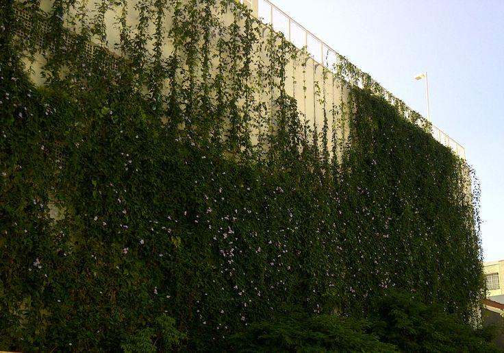 Brise Vegetal Ecotelhado em SP - Sena Madureira