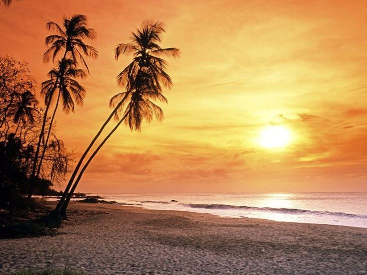 Top 10 things to do in Tobago | Caribbean travel inspiration