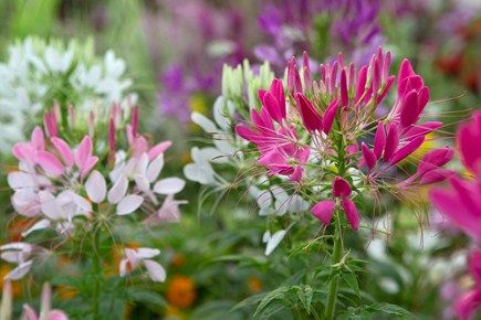 10 fast flowers to grow from seed