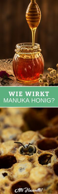Warum ist Manuka Honig so besonders? ✅ Welche Wirkungen stecken in dem Honig aus Neuseeland eigentlich ✅ Deshalb leben Sie mit Manuka Honig gesund ✅