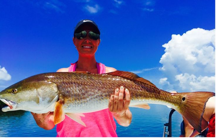 120 best tampa bay fishing charters images on pinterest for Deep sea fishing tampa