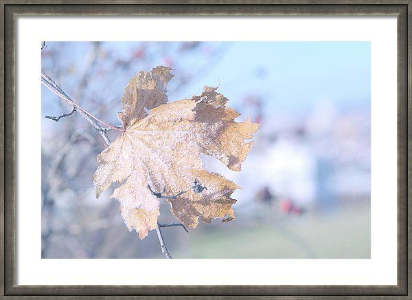 Jenny Rainbow Fine Art Photography Framed Print featuring the photograph Approaching Winter by Jenny Rainbow