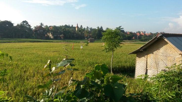 Ubud near Monkey forest