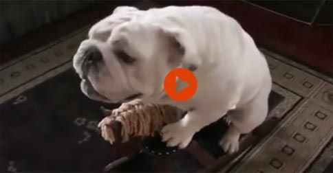 Super Intelligente Bulldog #Funny#Cute#Dogs#Adorable#Animals