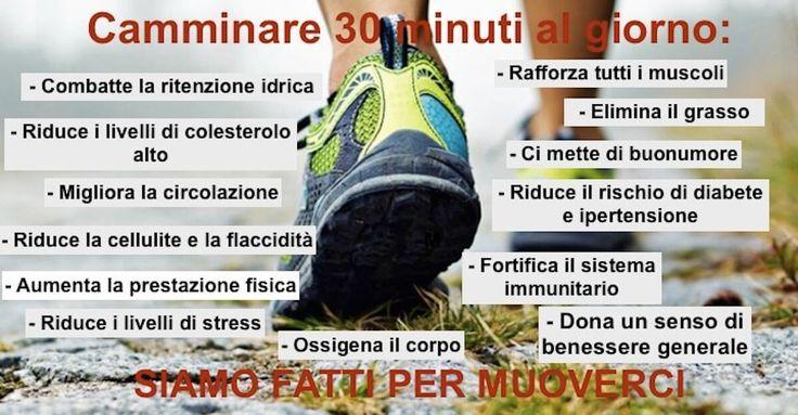 Che camminare faccia bene è una verità nota a molti. Nella vita frenetica di ogni giorno, la passeggiata è un'attività fisica che richiede un investimento di tempo che, generalmente, preferiamo dedicare ad altro. Eppure, soprattutto per coloro che non amano palestre o sport agonistici, la camminata è un'attività sostitutiva straordinaria per mantenersi in allenamento fisicamente e non solo. I benefici di questa attività motoria basilare sono intuibili (muscoli tonici, migliore metabolismo)…