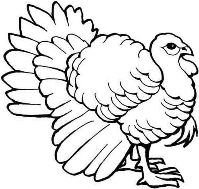 Printable Turkey Coloring Pages For Kids In 2020 With Images