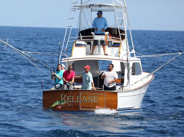 mahimahi, dolphin, dorado, charter boat, fishing, fresh mahi sandwich, guatemala,
