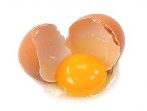 Yumurta Kabuğu Muzicesi