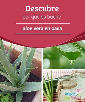 Descubre por qué es bueno cultivar aloe vera en casa  Cultivar aloe vera en casa es una gran idea que, sin lugar a dudas, te recomendamos.