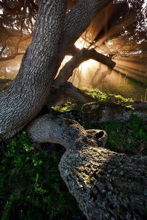 Dwesa Nature Reserve, Wild Coast, South Africa