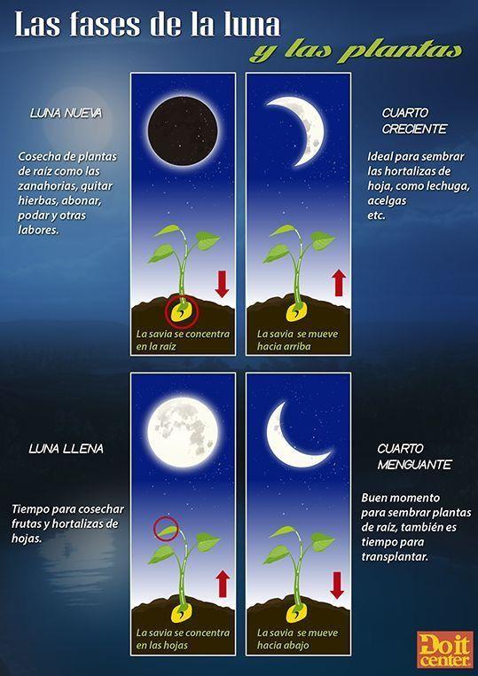 Fases de la luna y su relación con las plantas