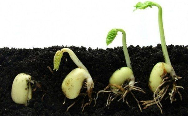 Про семена   Дачный сад и огород