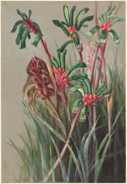 17 Best Images About Ellis Rowan 1848 1922 On