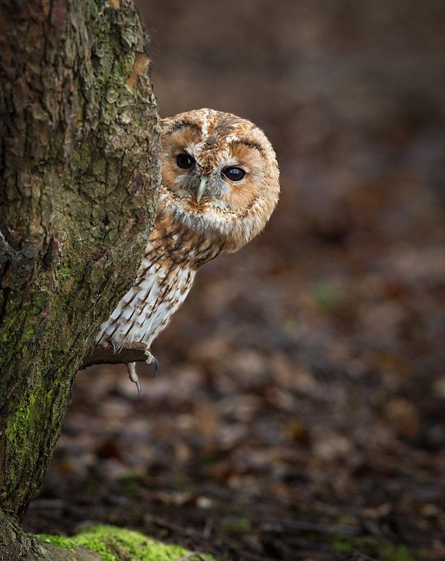 BBC Blogs - Winterwatch - Ten birds you might not know are endangered