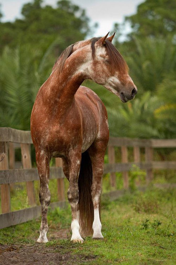 cool horse names - 512×768