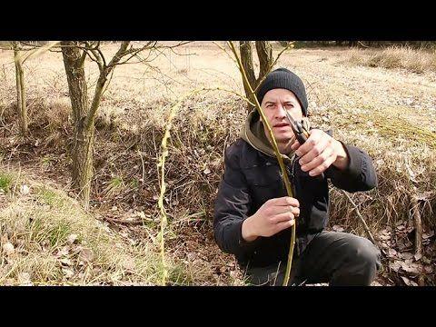 Wierzba (ukorzenianie, pomysły do ogrodu) - YouTube