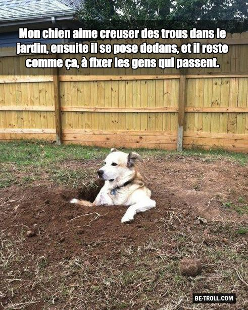 Best dog ever ? - Be-troll - vidéos humour, actualité insolite
