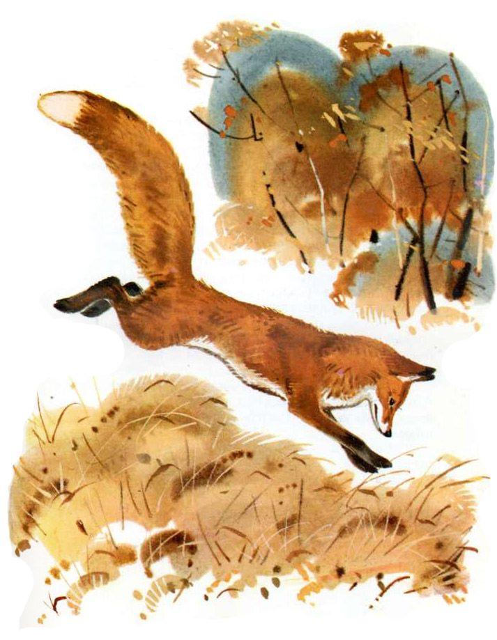 или маврский сладков лиса плясунья с картинками восхитились снимком