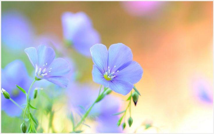 Light Blue Flowers Wallpaper | light blue flower wallpaper