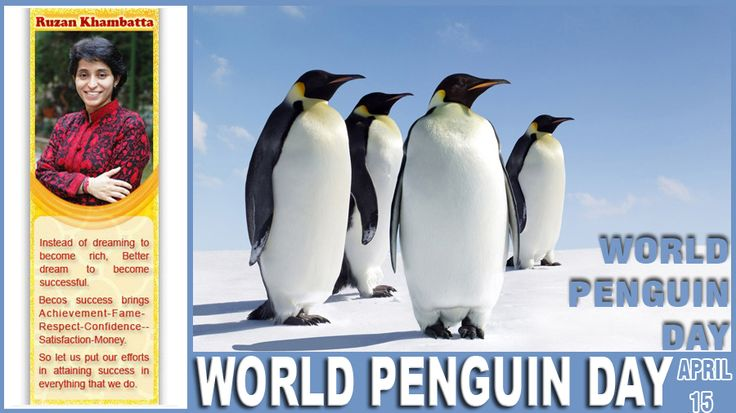 World Penguin Day is celebrated on April 25, 2015. The annual northward migration of penguins is on or around April 25th. Penguins are a group of aquatic, flightless birds living almost exclusively in the southern hemisphere, especially in Antarctica. Highly adapted for life in the water, penguins have countershaded dark and white plumage, and their wings have evolved into flippers.