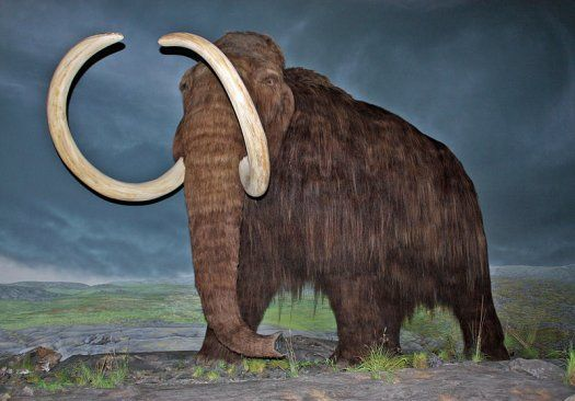 Russian and Korean Researchers Will Inject Mammoth DNA Into Elephant Eggs, Resurrecting 10,000-Year-Old Beast | Popular Science    WHAT?!
