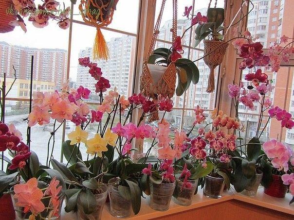 пересадка орхидей