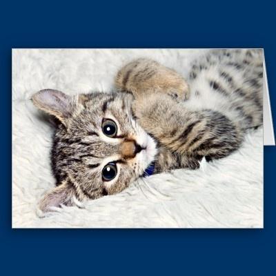 Surprised Kitten Birthday Greeting Cards