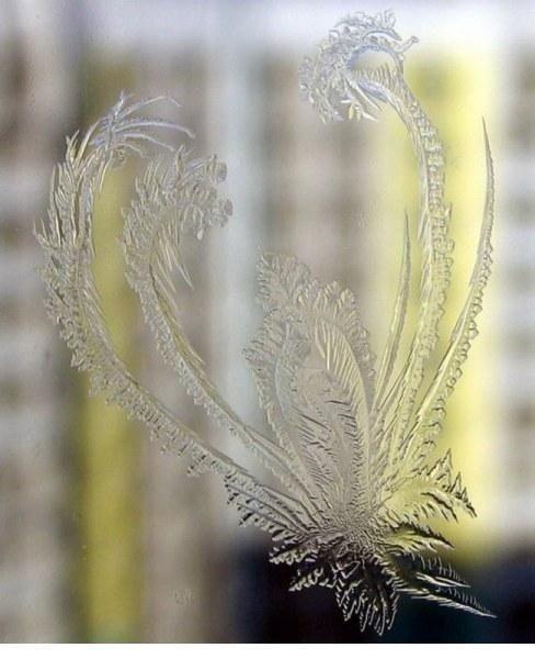 Узоры, которые появляются на окнах зимой.