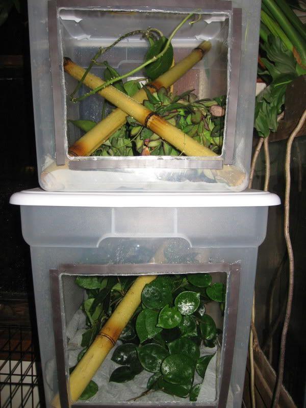 Magnet doors... ingenius! & 64 best Crested Gecko images on Pinterest | Crested gecko Reptile ... Pezcame.Com